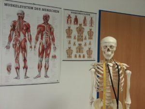 skeleton-645535_1280