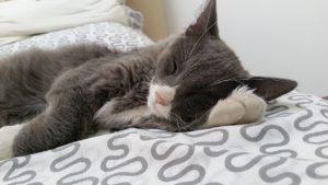 cat_nap